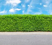 Tall hedge with the part of the gravel road — Stock Photo