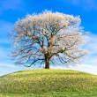 Stock Photo: Frosty tree at top of hill
