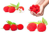 Berry images set — Stock Photo