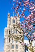Ely cathedral in spring — Stock Photo