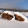 Snow covered pile of logs - Stock Photo