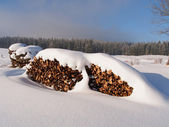 Snow covered pile of logs — Photo