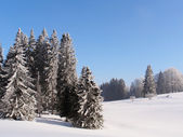 Jura Mountain in Winter, mont d or area — Stock Photo