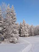 Spur in den schnee zu einem gefrorenen wald — Stockfoto