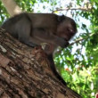 Monkeys in natural habitat — Wideo stockowe