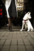 Stylish woman waiting with her dog — Stock Photo