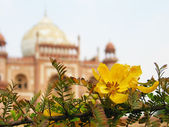 Acacia flower in front of Mogul mausoleum — Stock Photo
