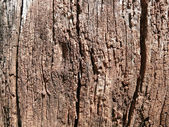 Age-roughened wood surface — Stock Photo