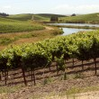 Stock Photo: Idyllic vineyards with windy river