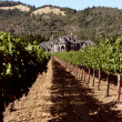 Idyllic vineyards with victorian vinery house — Stock Photo