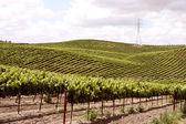 Idillyc виноградников на небольших склонах — Стоковое фото