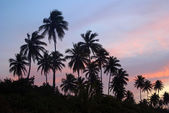 Palm grove on a tropical island at sunset — Stock Photo