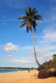 Tropical paradise beach with single palm tree — Foto Stock