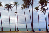 Palm trees on a tropical beach in Puerto Rico — Stock Photo