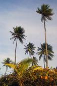 Tropical Palm grove on a carribean island — Stock Photo