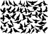 Dove silhouettes — Vector de stock