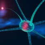 Neuronal cell — Stock Photo #44419429