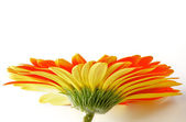 Orange Gerbera with Water Droplets — Stock Photo