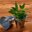 Tin Buskets with Plants — Stock Photo