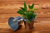 Plechové buskets s rostlinami — Stock fotografie