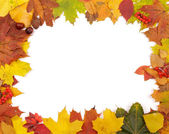Frame of Autumn Leafs — Stock Photo