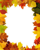 Frame of Autumn Leaves — Stock Photo
