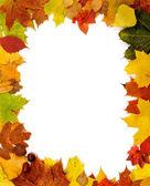 Frame van herfstbladeren — Stockfoto