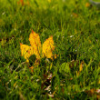 Maple Leaf in Green Grass — Stock Photo