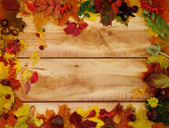 Autumn Leafs and Yield — Stock Photo