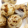 Quail Eggs — Stock fotografie #14369333