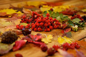 Ashberry and Leaves — Stock Photo