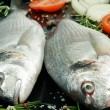 Fresh Gilthead — Stock Photo