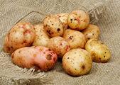 Rå potatis — Stockfoto