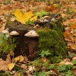 Tree Stump - Foto Stock