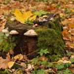 Tree Stump — Stock Photo #19706409