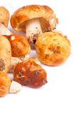 Edible Mushrooms — Stock Photo