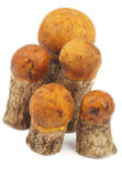 Orange-Cap Boletus — Stock Photo