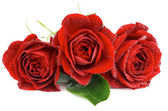 Three Red Roses — Stock Photo