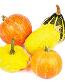 Squash and Pumpkins — Stock Photo