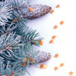 Spruce Branch with Hoar-Frost — Stock Photo