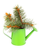 Bunch of Spruce Branch — Stock Photo
