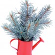 Blue Spruce Branch — Stockfoto