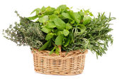 Herbs in Basket — Stock Photo