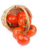 Ripe Tomatoes — Стоковое фото