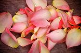 Pétalas de rosa cor de rosa — Fotografia Stock