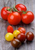 各种西红柿 — 图库照片