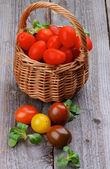 Различные помидоры — Стоковое фото