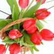 Spring Tulips — Stock Photo #44575383
