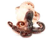 Smoked Octopuses — Stock Photo