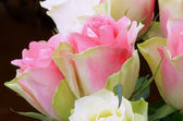 Yellow Pink Roses — Stock Photo